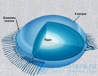 Структура хрусталик глаза человека