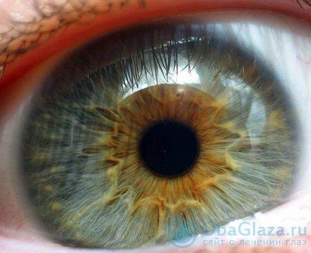 Строение зрачка глаза