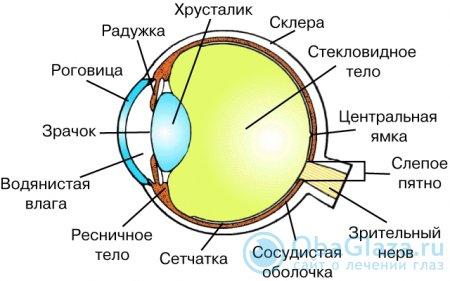 Функции слепого пятна