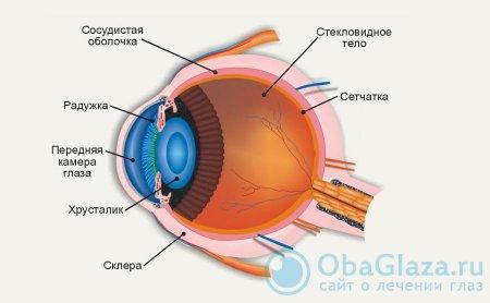 описание и строение склеры глаза