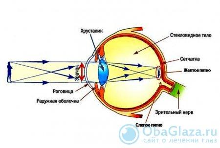 Оптическая система человеческого глаза